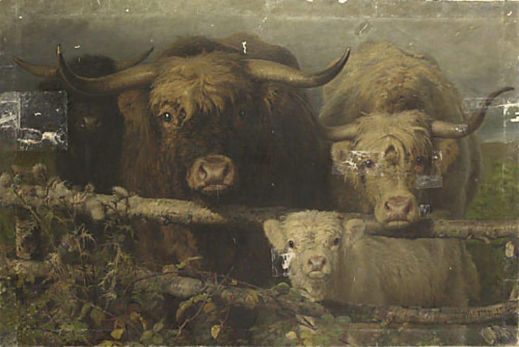 Bestiaux écossais