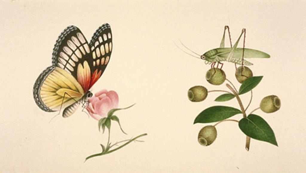Papillon et sauterelle
