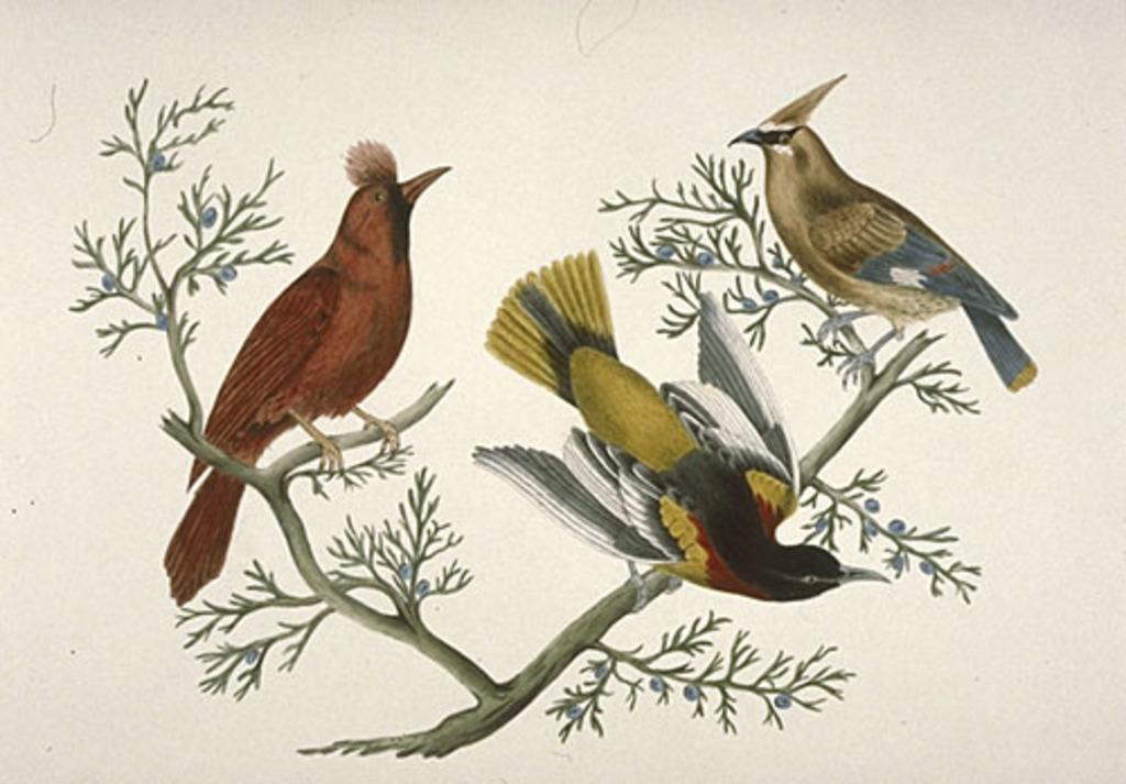 Trois Oiseaux sur une branche de genévrier
