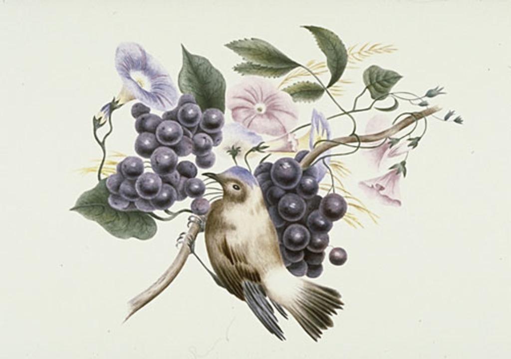 Oiseaux, fleurs et fruits