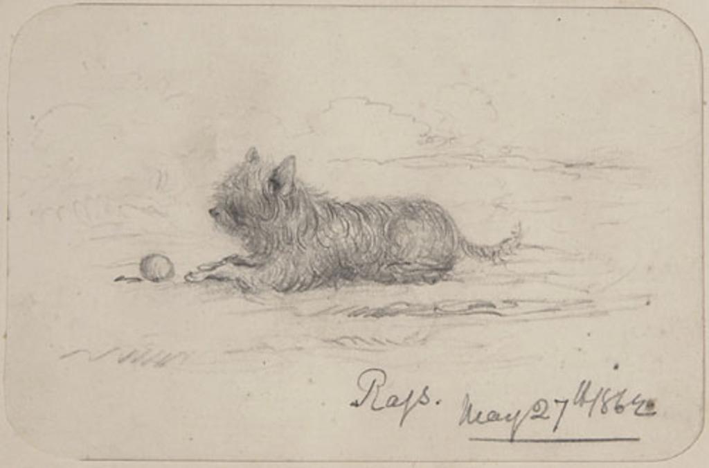 Portrait de chien, de l'album du capitaine Frederick Stevenson