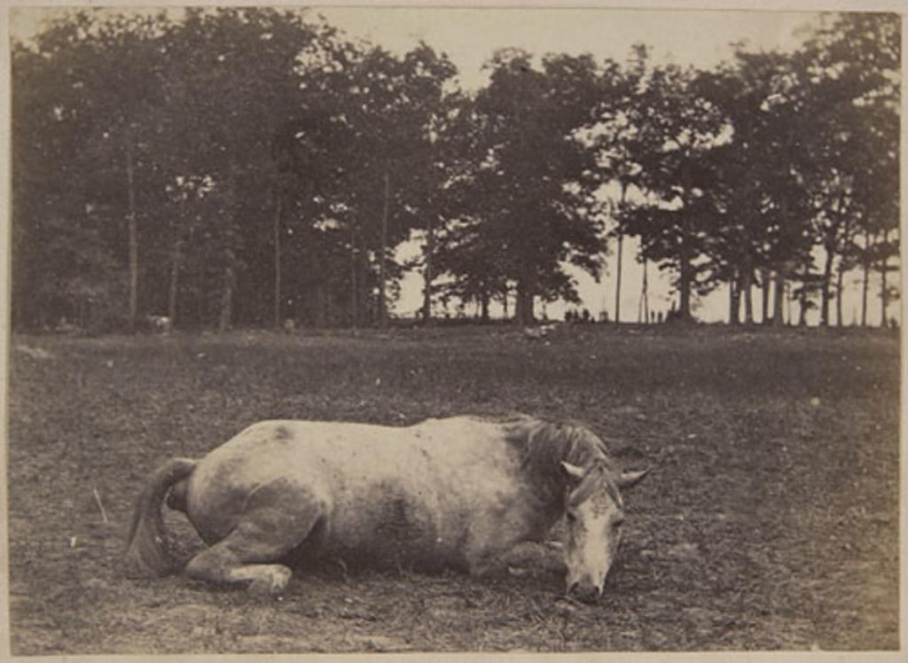 Le Cheval mort d'un officier, de l'album du capitaine Frederick Stevenson