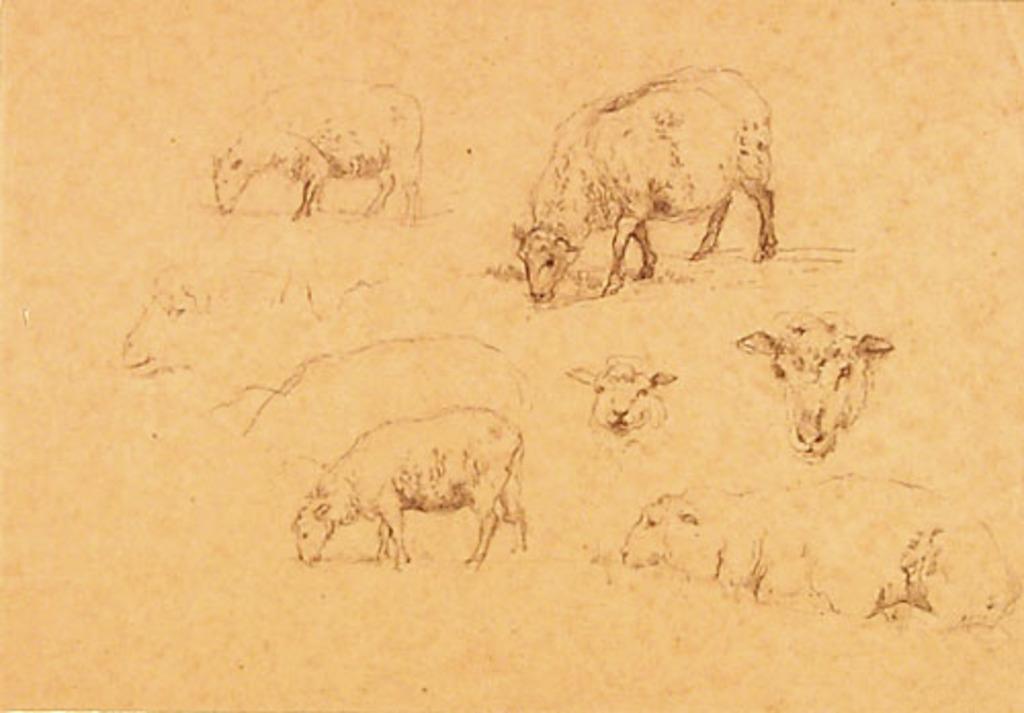 Études de moutons