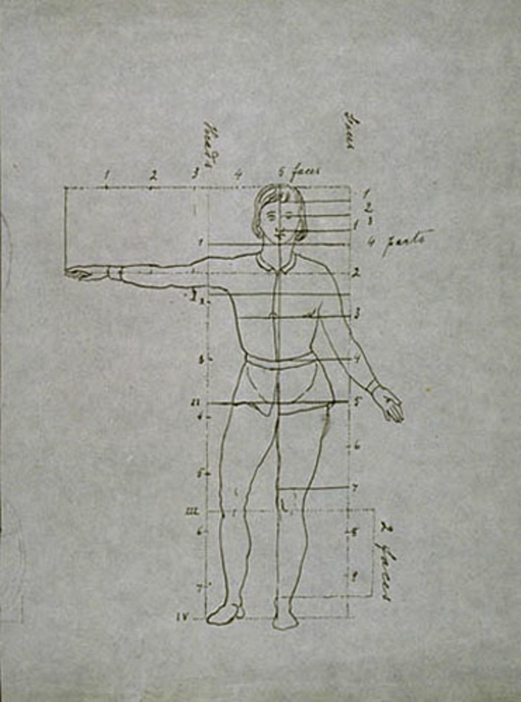 Étude de proportions anatomiques