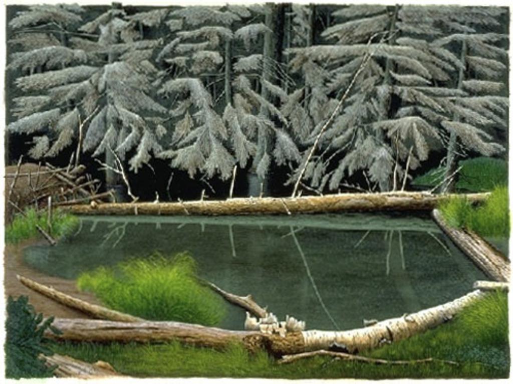 Forêt morte à l'étang