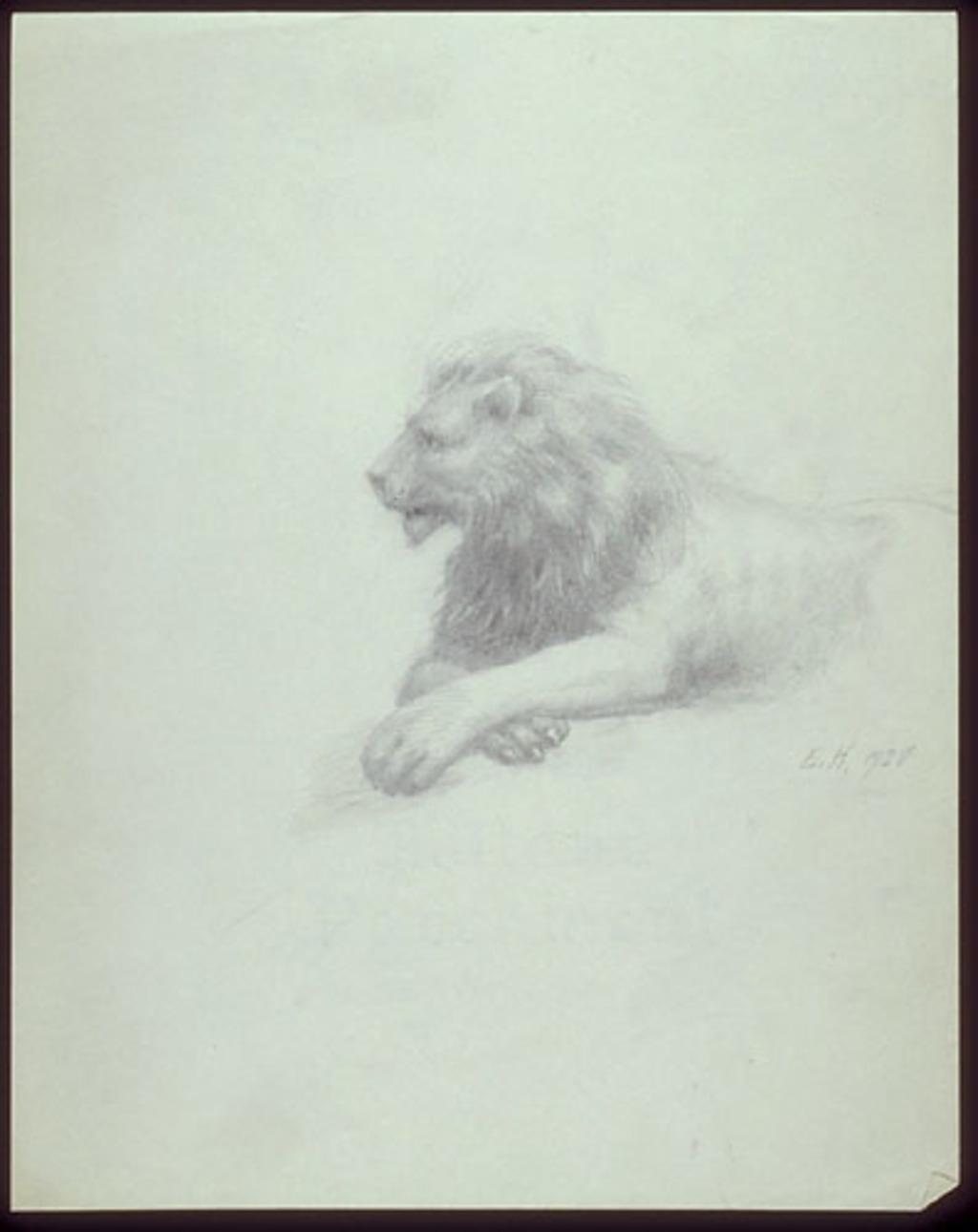 Étude d'un lion couché