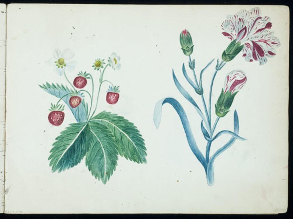 Fraises et fleurs