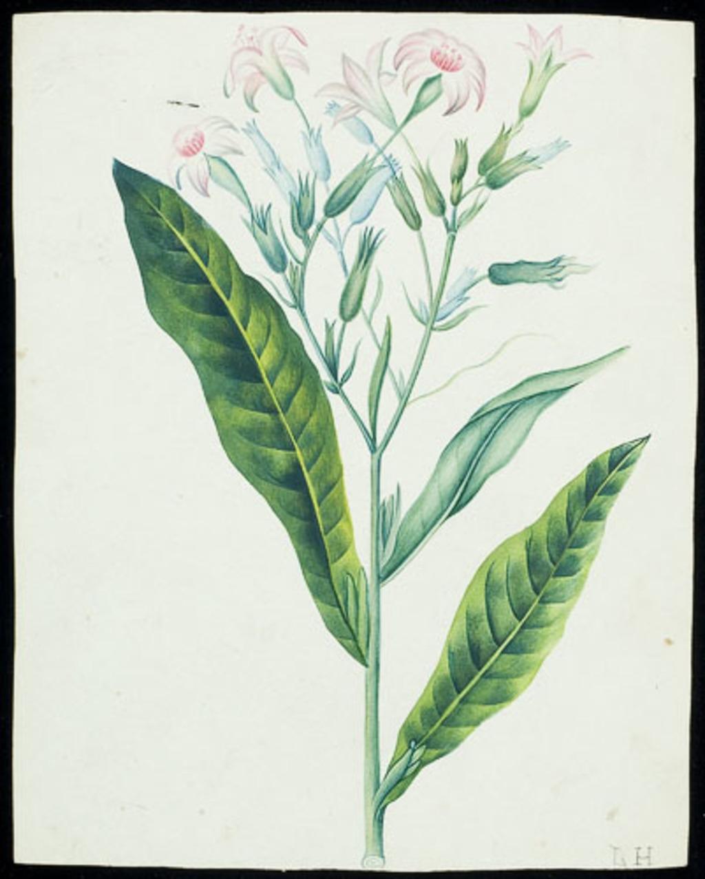 Tige de fleurs