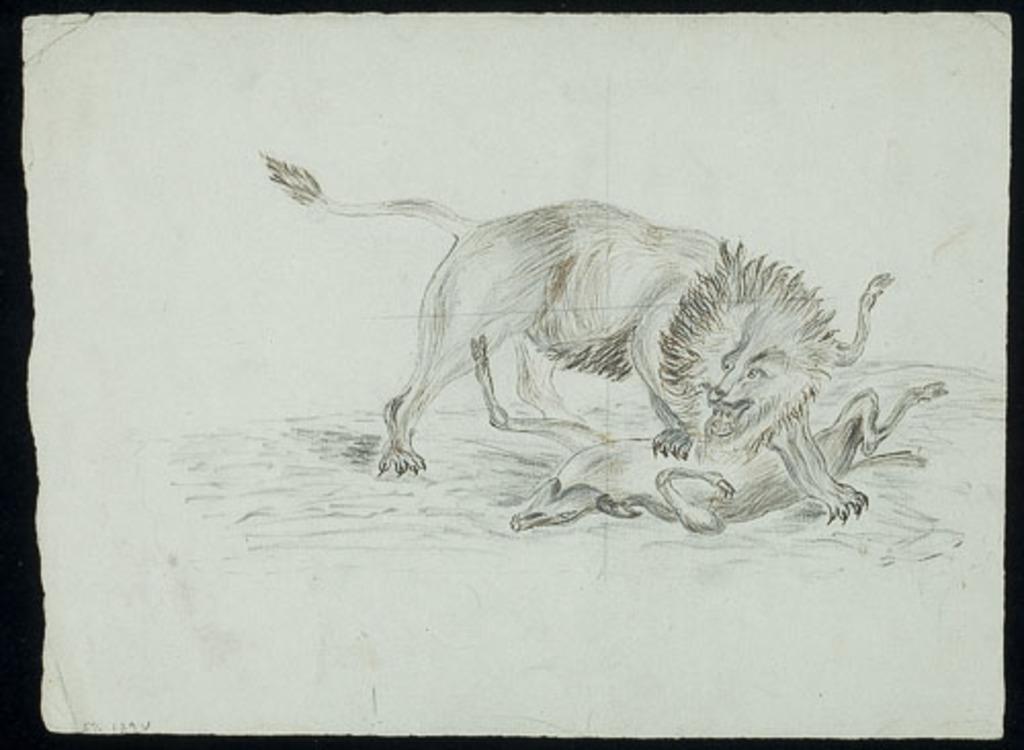 Lion sur sa proie
