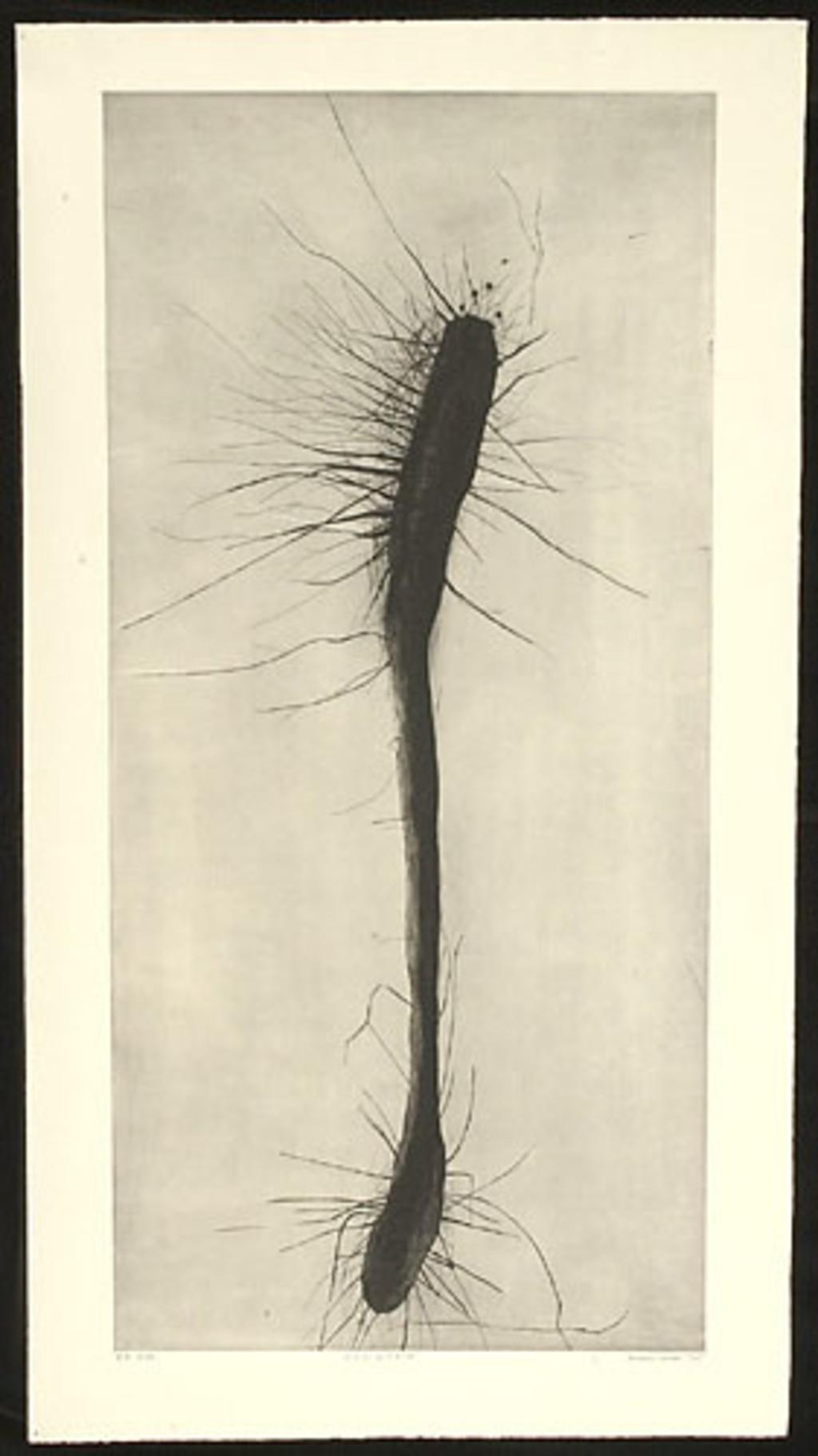 Synapsis