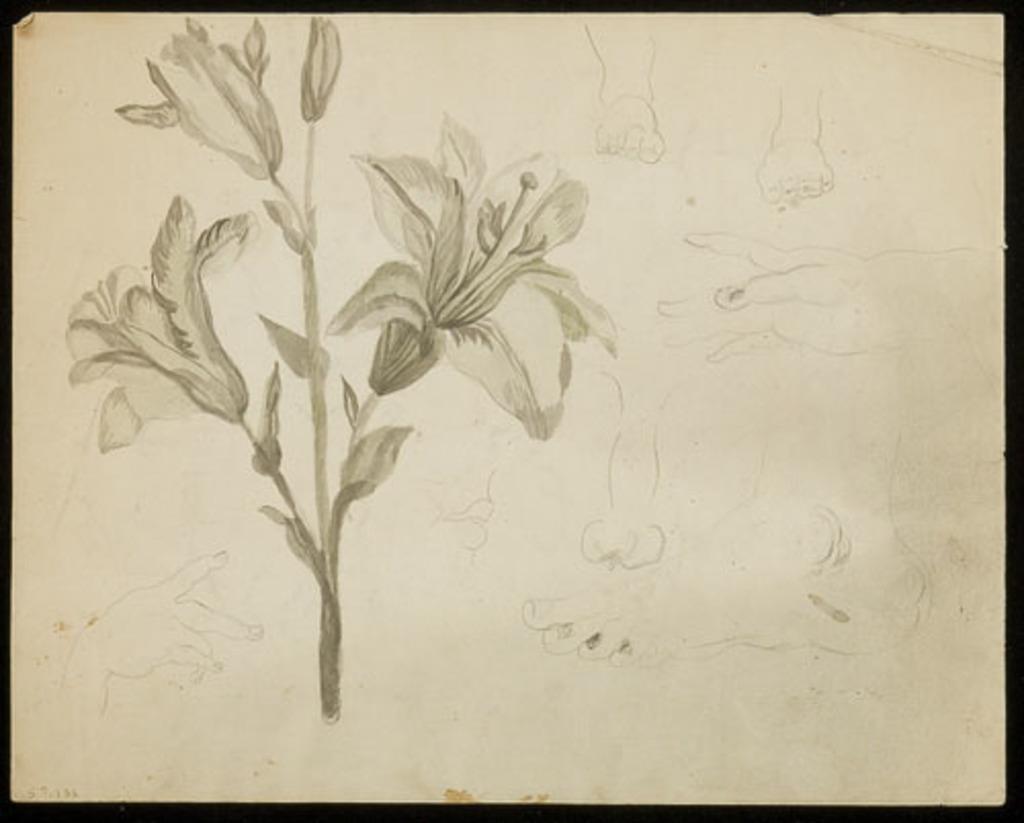 Fleurs et étude de mains et de pieds