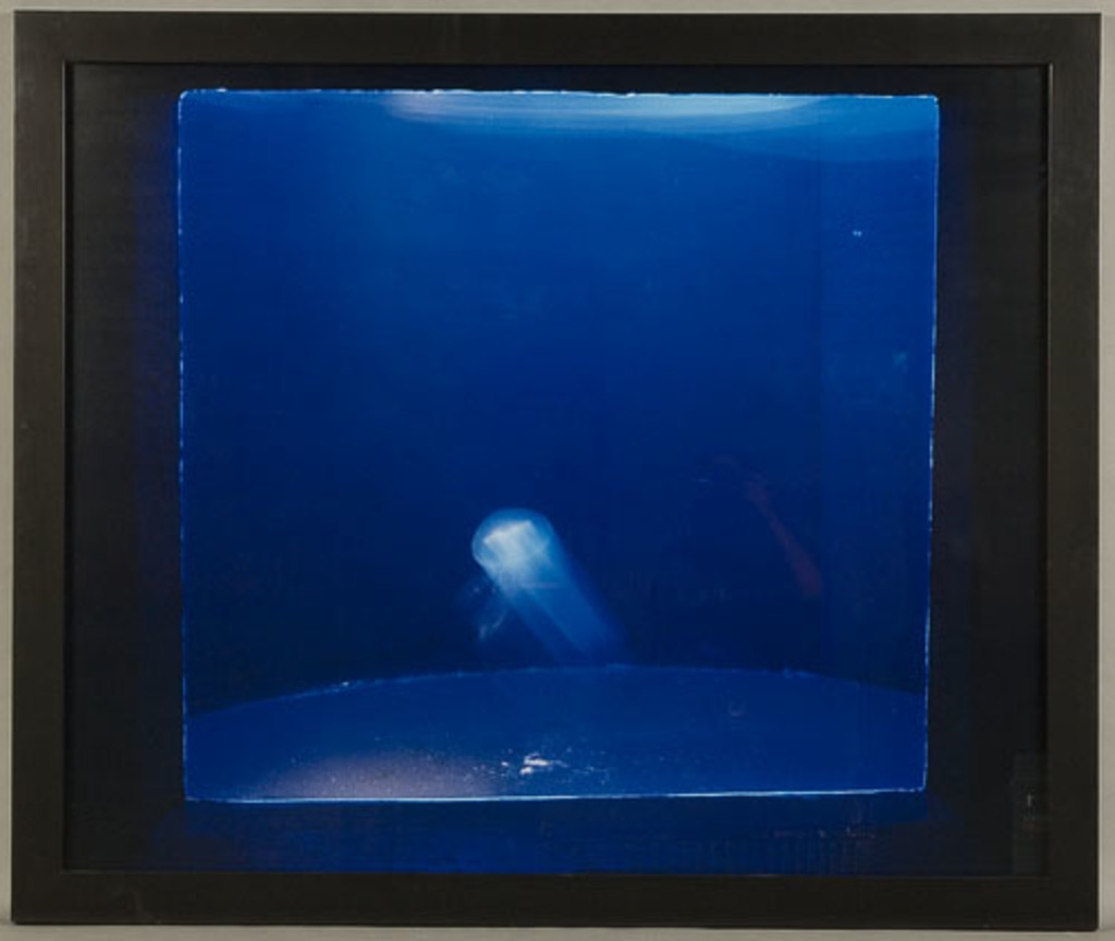 La Discoluminescence d'Aurelia Aurita