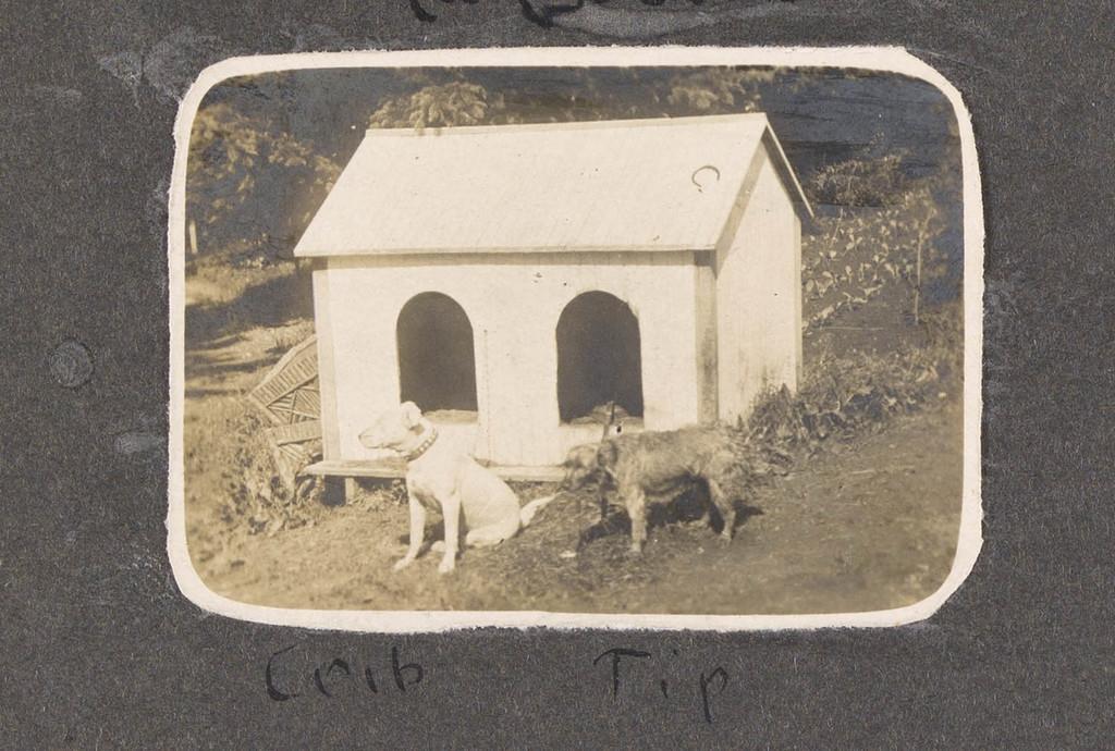 Les Chiens Crib et Tip, Sainte-Agathe