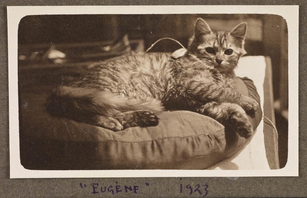 Le Chat Eugène