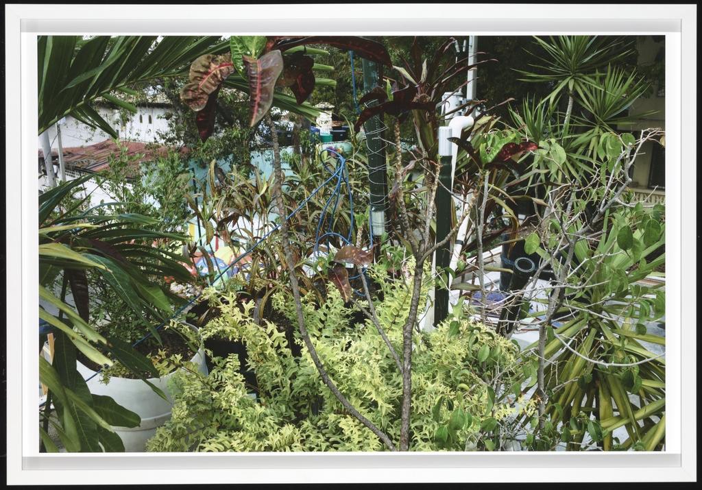 Jardin sur la terrasse, Pétionville (Haïti)